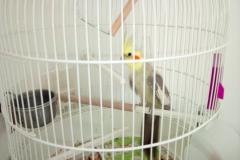 Dans la classe des CE, nous avons un oiseau qui nous accompagne tout au long de la journée de son doux et mélodieux chant ….